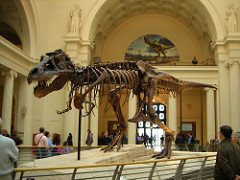 A T-Rex Named Sue - Field Museum, photo by Lisa Andres, obtained from Flickr. CC BY 2.0.