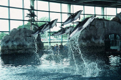 Shedd Aquarium - Dolphin Show - Chicago, IL, photo by Smart Destinations, obtained from Flickr. CC BY-SA 2.0.